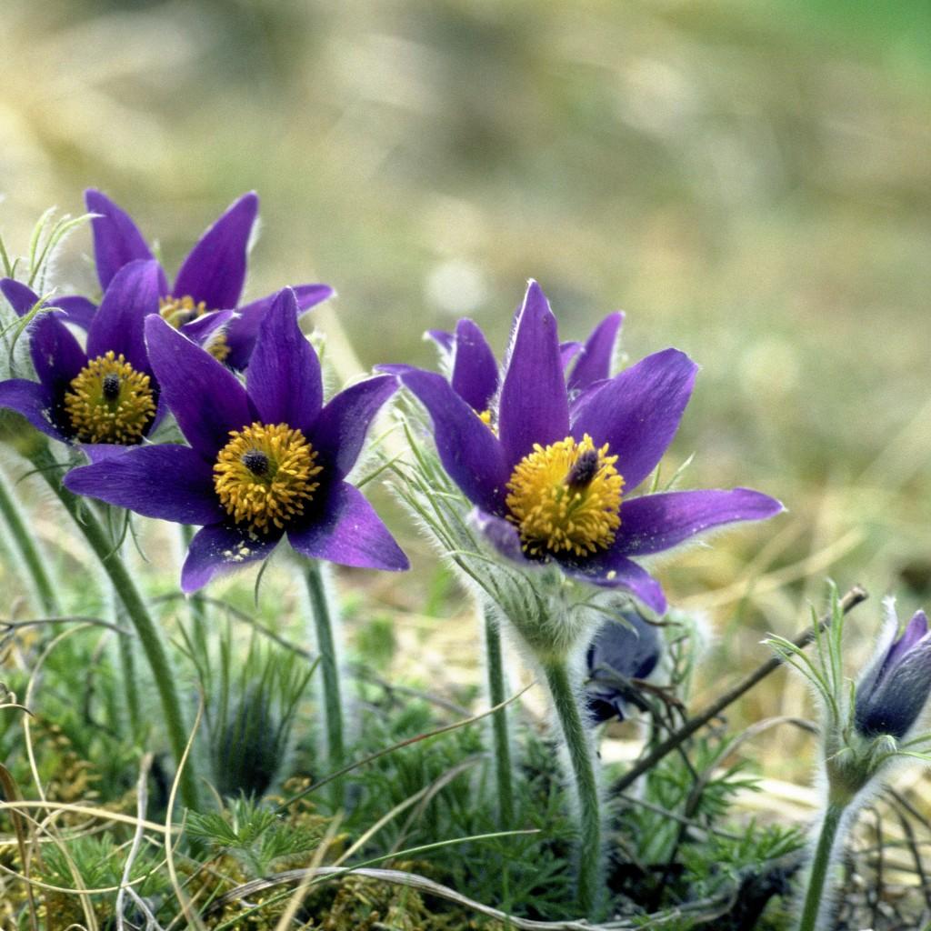 Résultat d'images pour image de fleurs de printemps